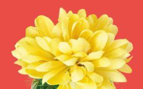 La felicità del cactus di Sarah Haywood